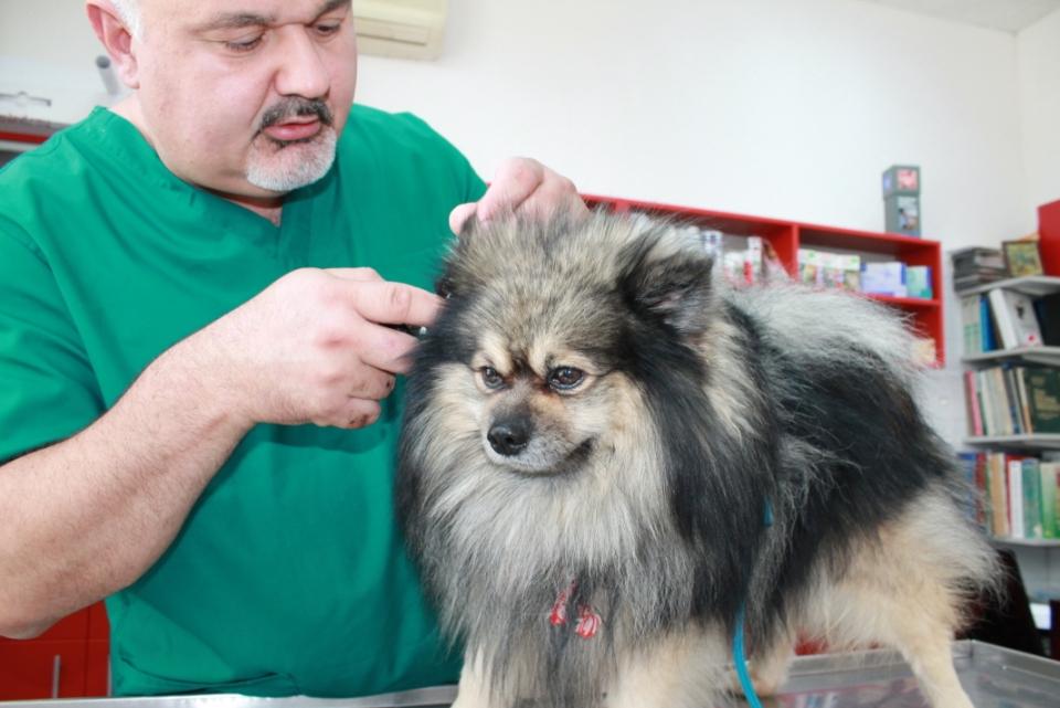 Dr Jechkov
