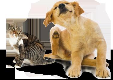 dog_cat_scratching_ear2