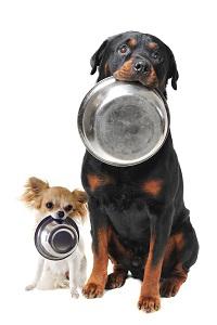 хранене на възратни кучета